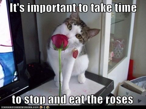 It's important to take time       to stop and eat the roses