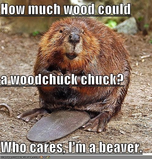 animals,beaver,sarcastic,Tongue Twister,woodchuck
