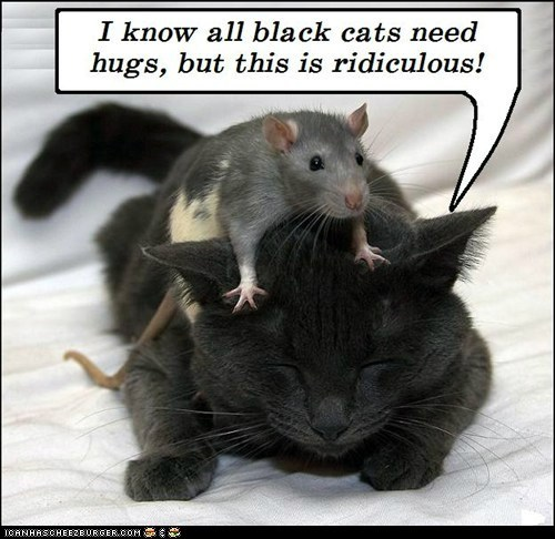 Hug your black cat today!