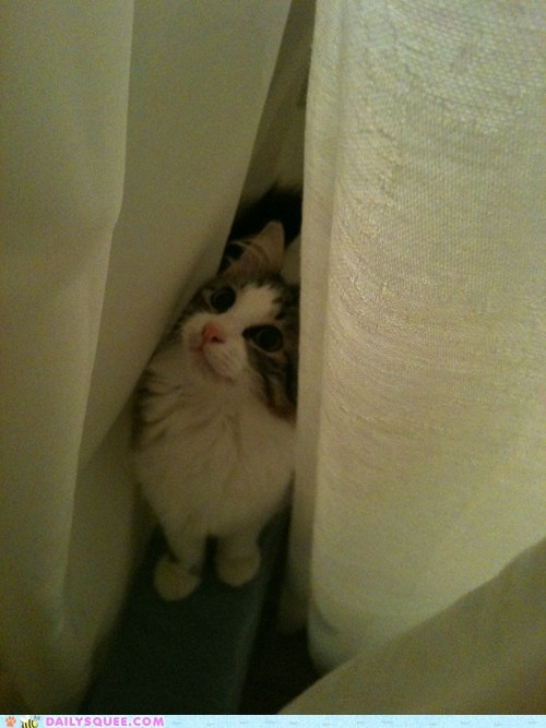adventure time,cat,curious,lolwut,quote,reader squees,shower,spelunking