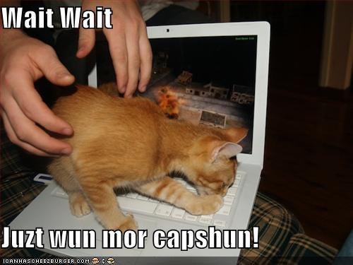 Wait Wait  Juzt wun mor capshun!