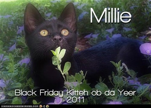 Millie - Black Friday Kitteh ob da Yeer, 2011