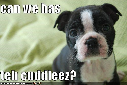 can we has  teh cuddleez?