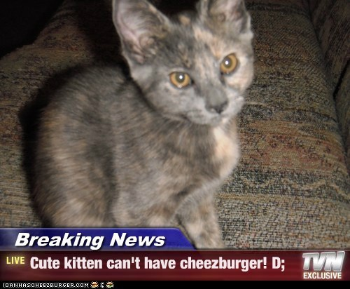 Breaking News - Cute kitten can't have cheezburger! D;
