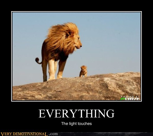 animals,lion king,lions,Pure Awesome,simba,the light