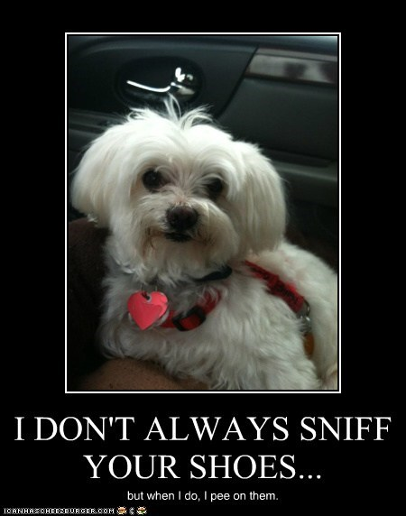 I DON'T ALWAYS SNIFF YOUR SHOES...