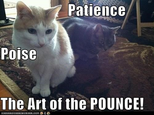 Patience  Poise The Art of the POUNCE!