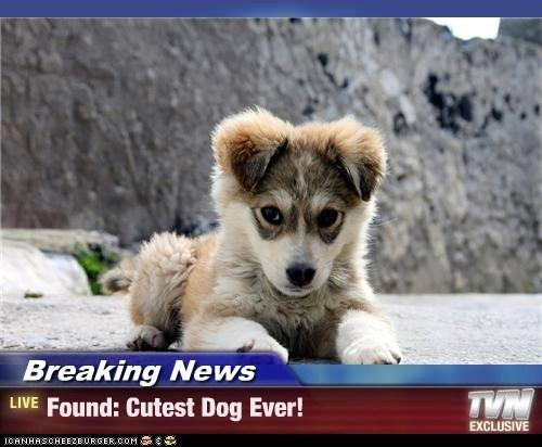 Breaking News - Found: Cutest Dog Ever!