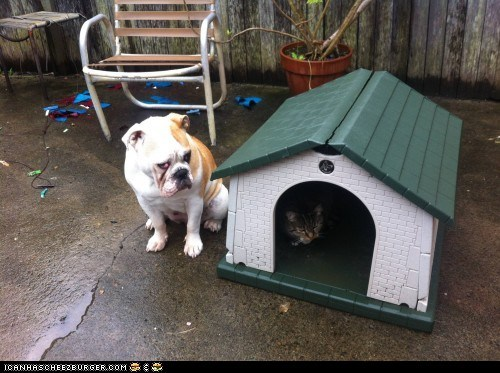 Deal With It,doghouse,goggies,goggies r owr friends,Interspecies Love,unfair