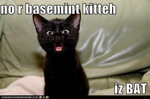 basement cat,bat,caption,captioned,cat,imitation,impression,kitten,no,not