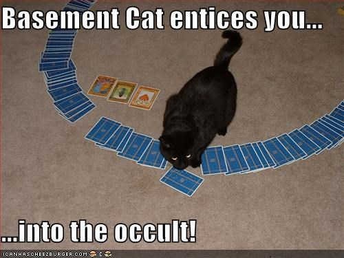 basement cat,cat,fortune telling,I Can Has Cheezburger,occult,tarot,tarot cards
