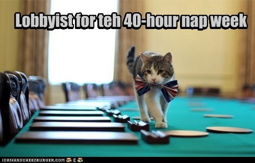 40-hour,bow tie,caption,captioned,cat,lobbyist,nap,politician,politics,week