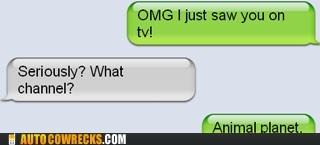 animal,animal planet,television,TV