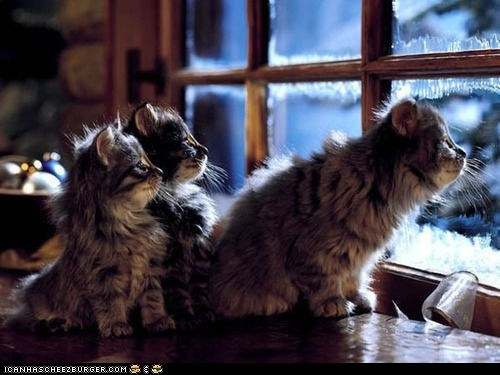 Advent Kittehs of teh Day: Winter Is Coming Here