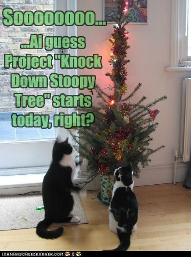 Goes in line with Project Keep Christmas Tree Standing...