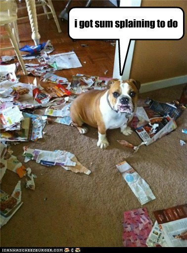 bulldog,destruction,explaination,in trouble,mess,oops,paper,torn up