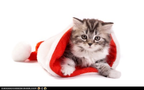 Advent Kitteh of teh Day: Santa Wuz Heer, Butt (!) Ai Eeted Himz!