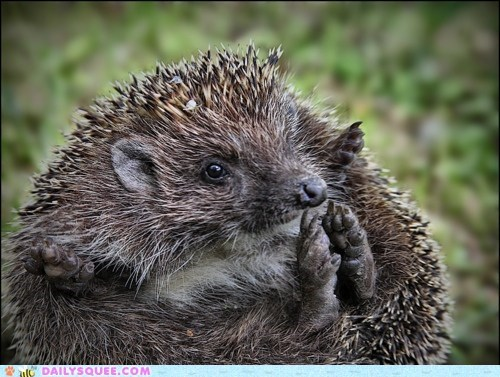 baby,clapping,feet,happy,hedgehog,hypothetical,instructions,song,touching