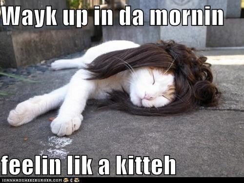caption,captioned,cat,keha,lyrics,passed out,pun,similar sounding,song,tik tok,wake,waking up,wig