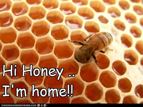 Hi Honey ..I'm home!!