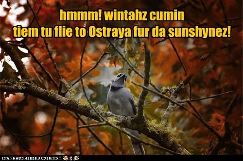 hmmm! wintahz cumin tiem tu flie to Ostraya fur da sunshynez!