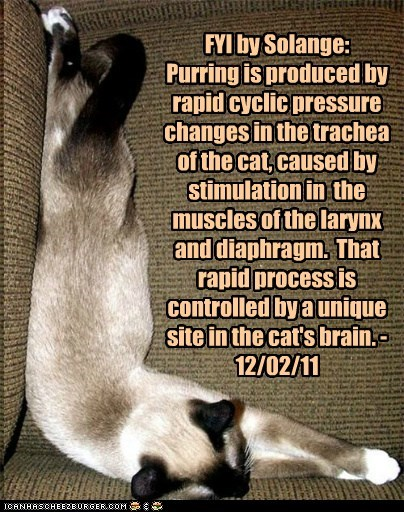 FYI by Solange:  Purring is produced by rapid cyclic pressure changes in the trachea of the cat, caused by stimulation in  the muscles of the larynx and diaphragm.  That rapid process is controlled by a unique site in the cat's brain. - 12/02/11