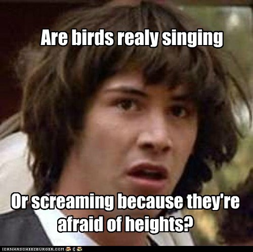 birds,conspiracy keanu,heights,screaming,singing
