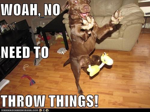 animals,dogs,i has a hotdog,playing,throw,toy