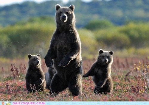 Acting Like Animals: Waltz of the Dancing Bears