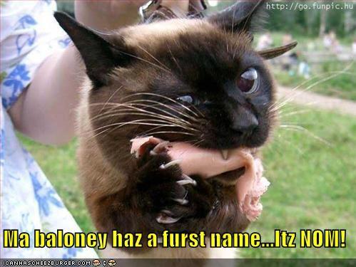 baloney,Hall of Fame,lolcats,nom