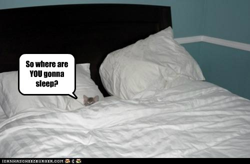 beds,caption,captioned,Cats,hog,hoomins,sheets,sleep,sleeping,space,tucked in