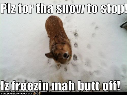 Plz for tha snow to stop!  Iz freezin mah butt off!