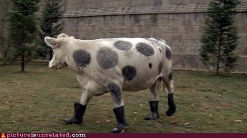 animals,boots,cow,wtf