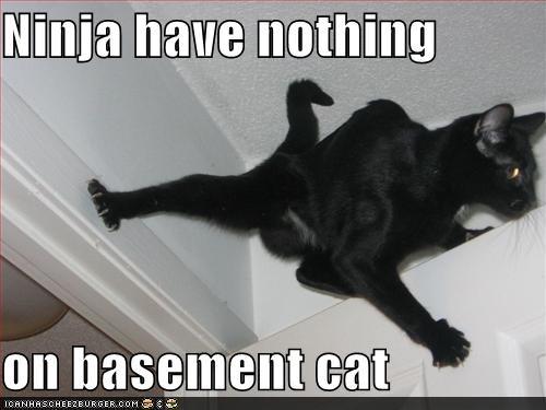 Ninja have nothing  on basement cat