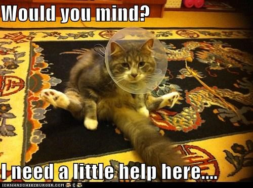 Would you mind?  I need a little help here....