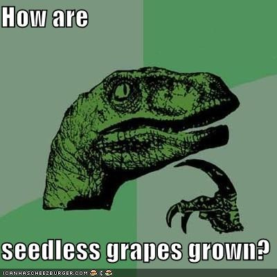 How are  seedless grapes grown?