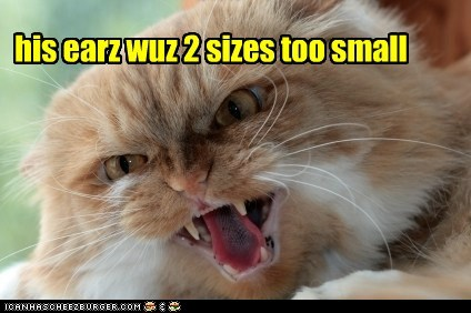 his earz wuz 2 sizes too small