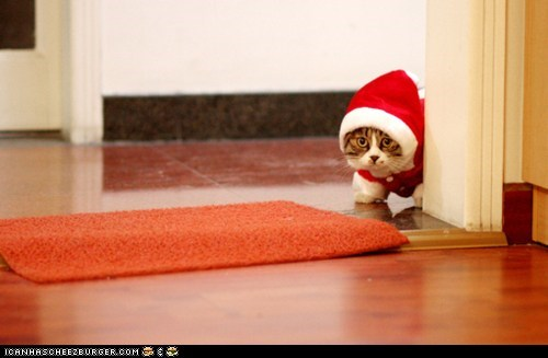 advent calendar,christmas,corner,cyoot kitteh of teh day,holidays,peeking,santa,santa hats,the 25 days of catmas