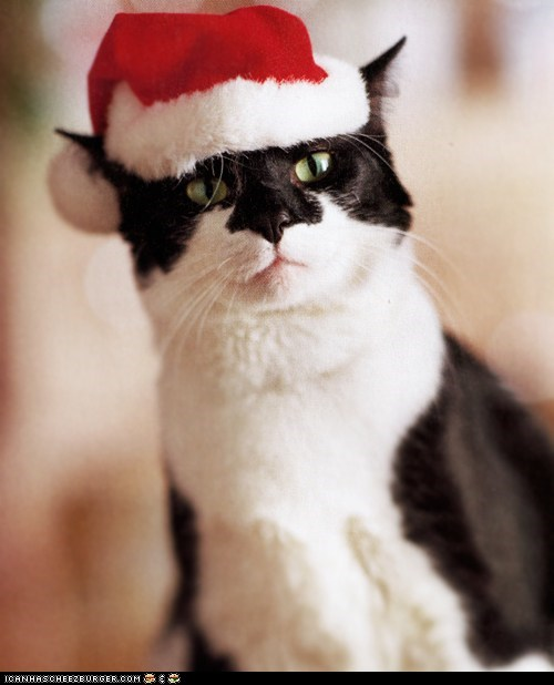 Advent Kitteh of teh Day: I Can Has Milk 'n Cookiez?