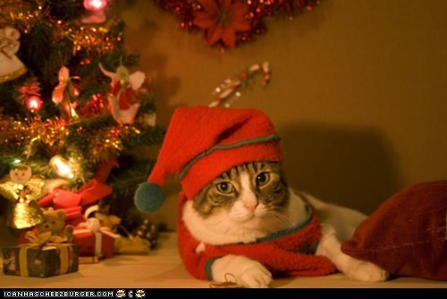 advent calendar,christmas,christmas tree,costume,cyoot kitteh of teh day,dressed up,elves,hats,holidays,the 25 days of catmas