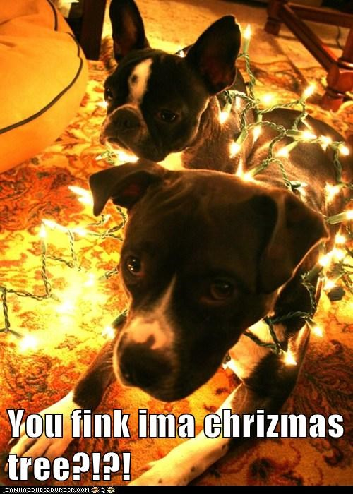 You fink ima chrizmas tree?!?!