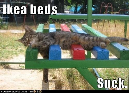 bed,beds,caption,captioned,cat,dissatisfied,do not want,ikea,laying down,suck