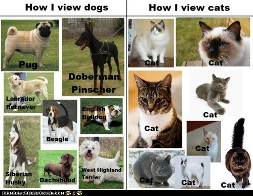 Viewing Goggies vs. Viewing Kittehs