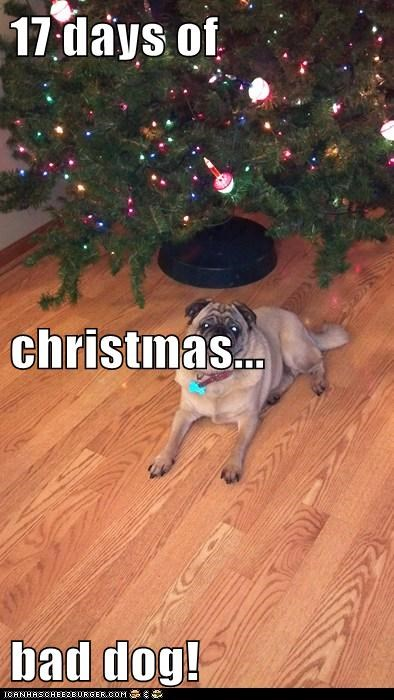 17 days of christmas... bad dog!