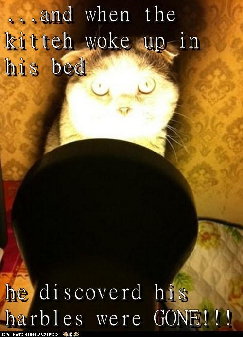 awake,bed,caption,captioned,cat,do not want,harbles,horror,in,missing,scary,story,when,woke up