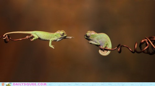 acting like animals,Babies,baby,chameleon,chameleons,gap,grab,Hall of Fame,hand,Reach,reaching,rescue,suggestion,tongue