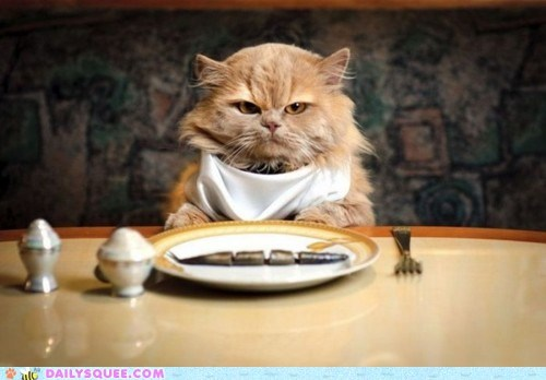 acting like animals,cat,dining,disappointed,expectations,fancy feast,filet mignon,fish,food,noms,reality,restaurant,upset