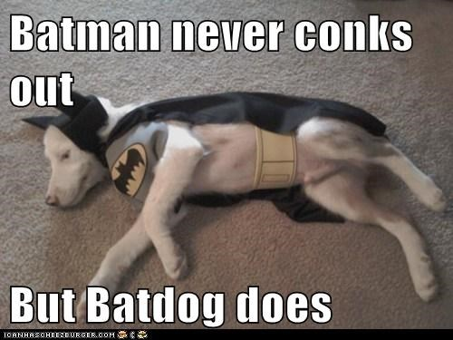 Batman never conks out  But Batdog does