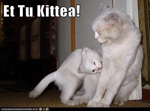caesar,caption,captioned,cat,Cats,et tu brute,quote,similar sounding