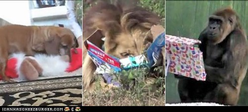 8 Videos of Cute Animals Opening Presents